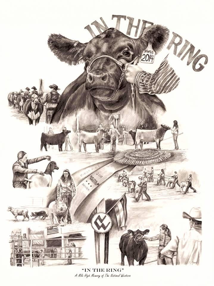 cattle stuff on pinterest show cattle cattle