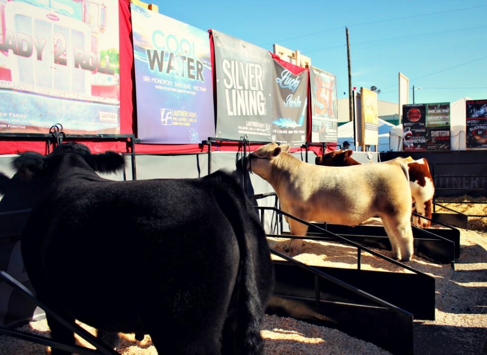 Lautner Farms Sire Directory 2015 Home
