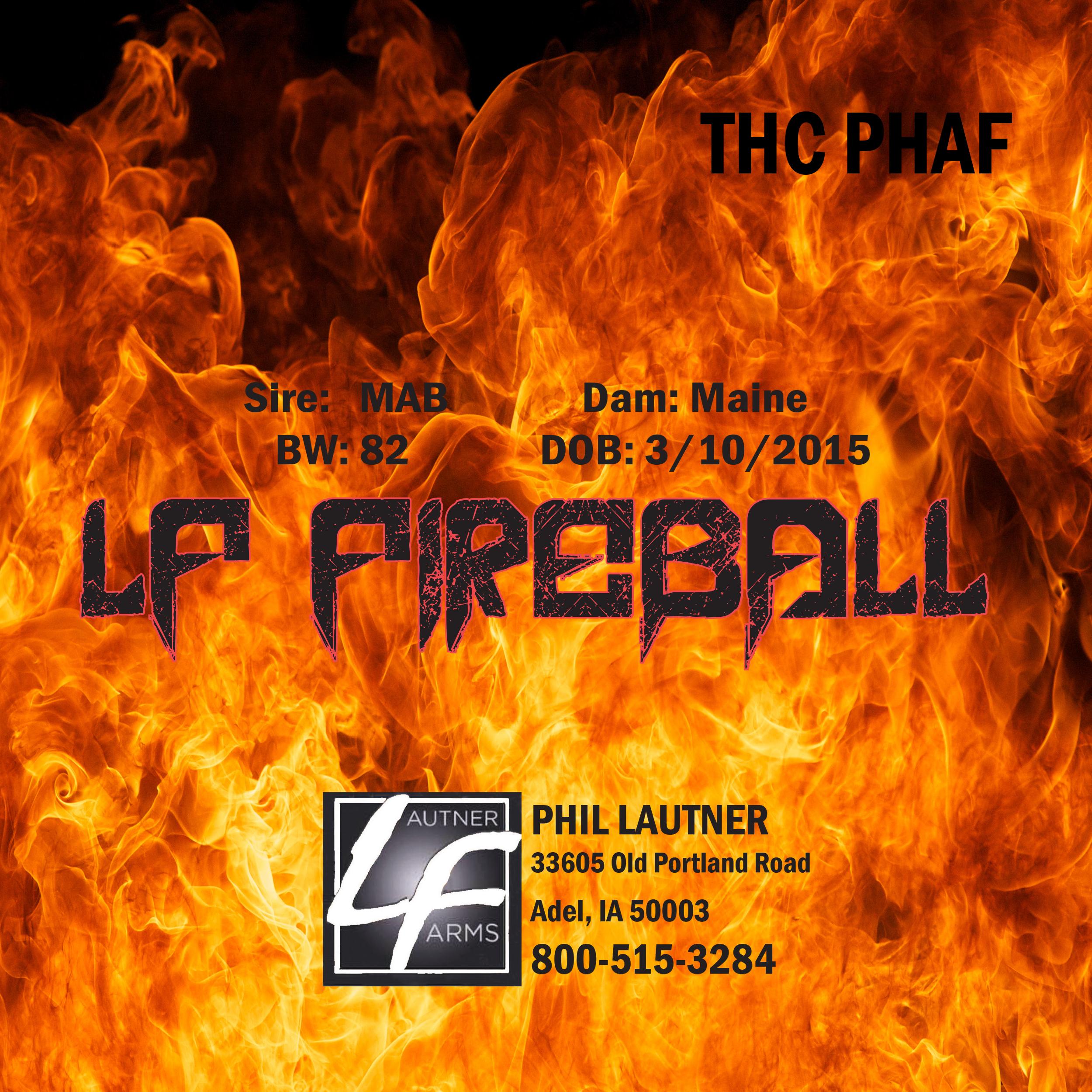 fireball banner-3final