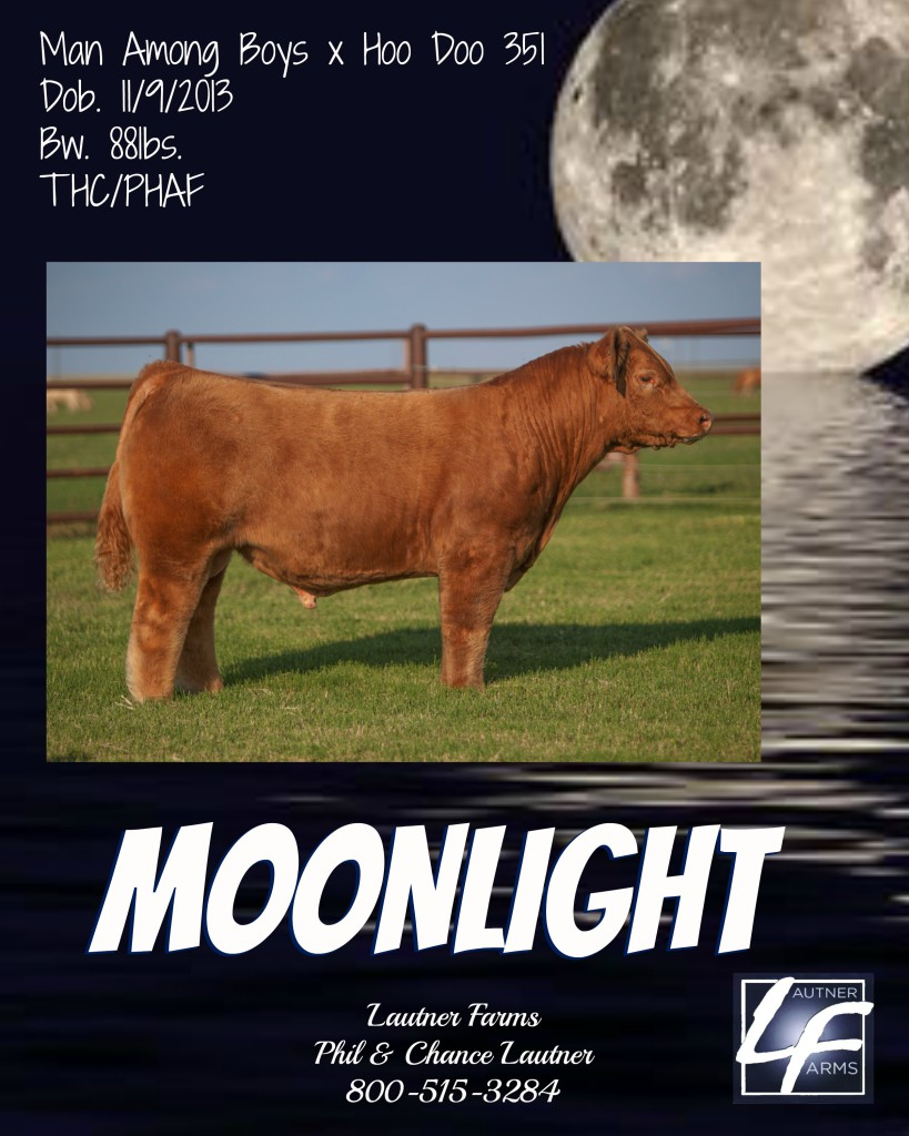 moonlight ad
