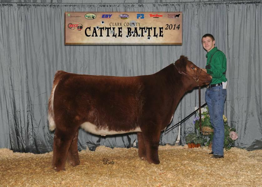 Cattle Battle 2014