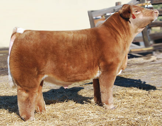 Lot 11 -  texastwister_big