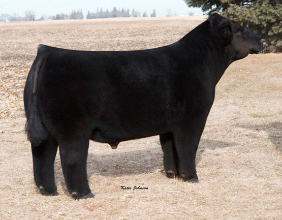 Lot 17 - unstoppable_12B