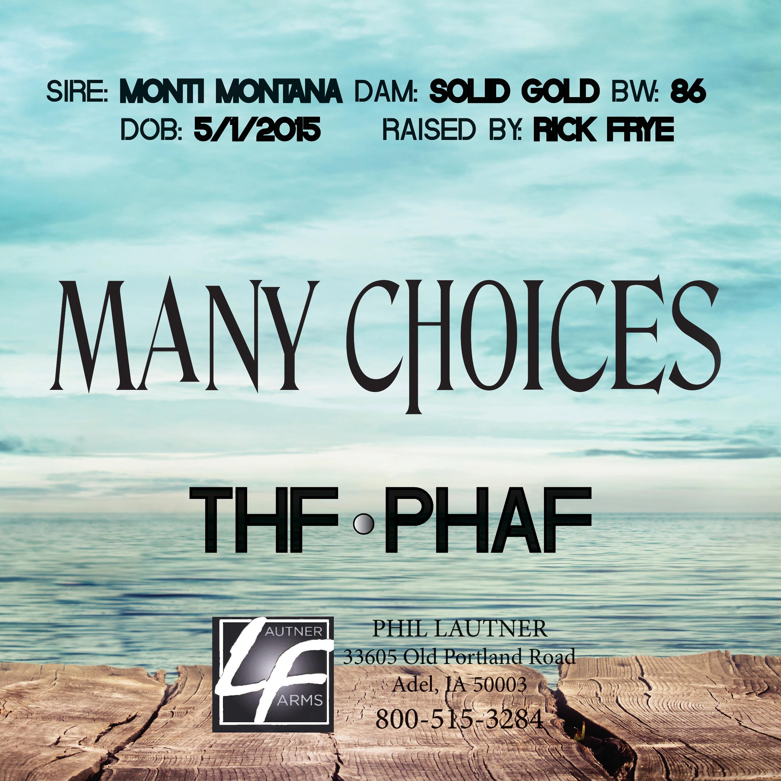 Many Choices-2