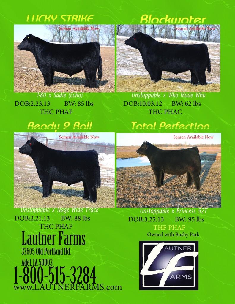 NLE_march_2013_pg_1_new_bulls_PDF