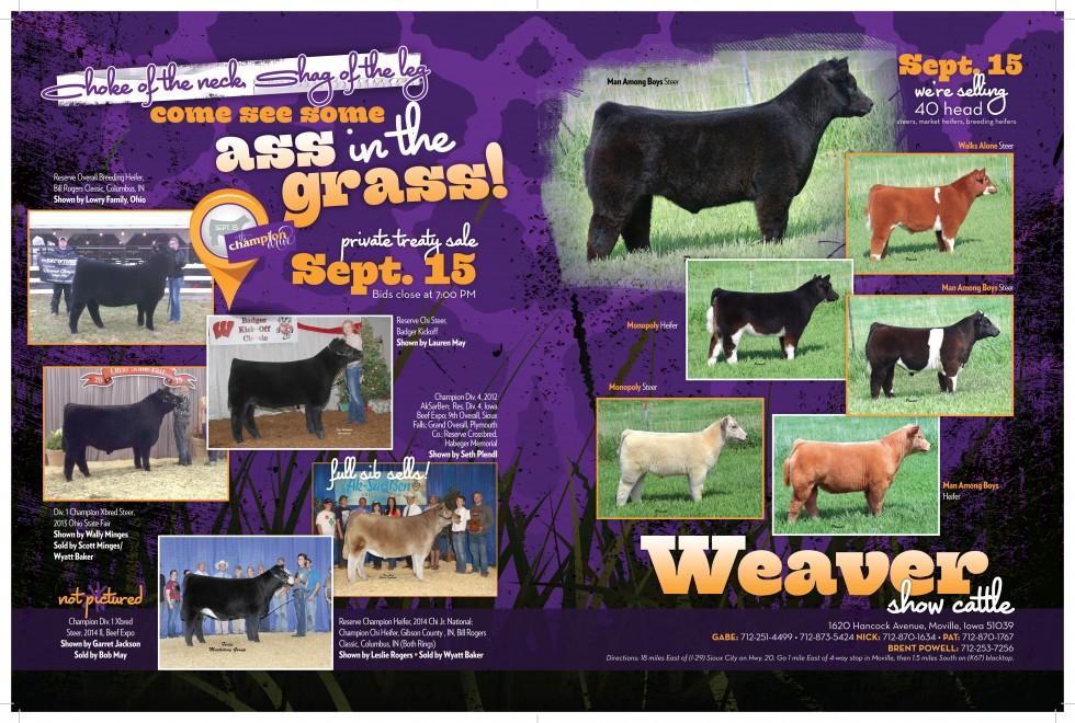 Weaver Show Cattle HR