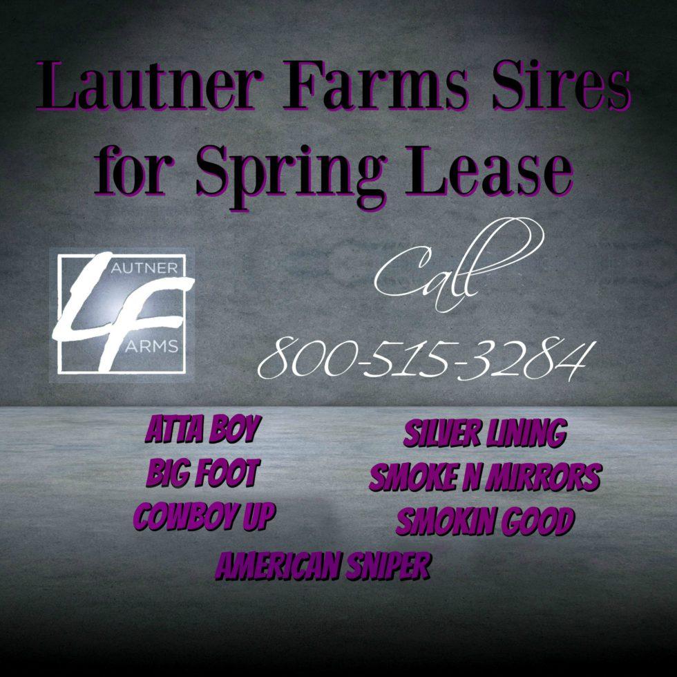 bull lease ad