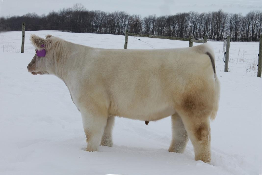 tag 129 steer