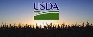 usda - corn field sunset